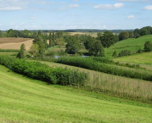 Agroforstsysteme mit Feldhecken