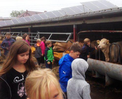 Spannender Ferientag bei Landwirtschaftsbetrieb Domin in Peickwitz