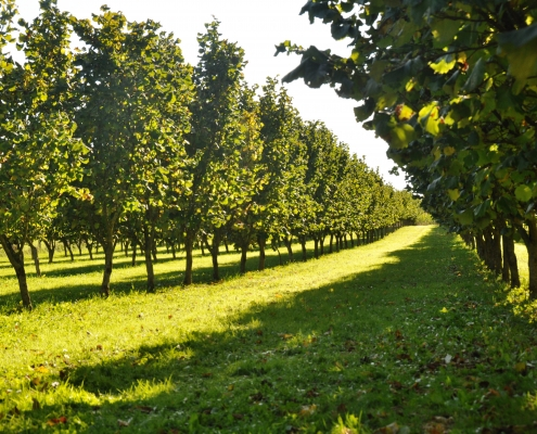 7. Forum Agroforst in Freising