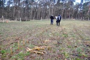 Stecken der Weiden in Gömnigk